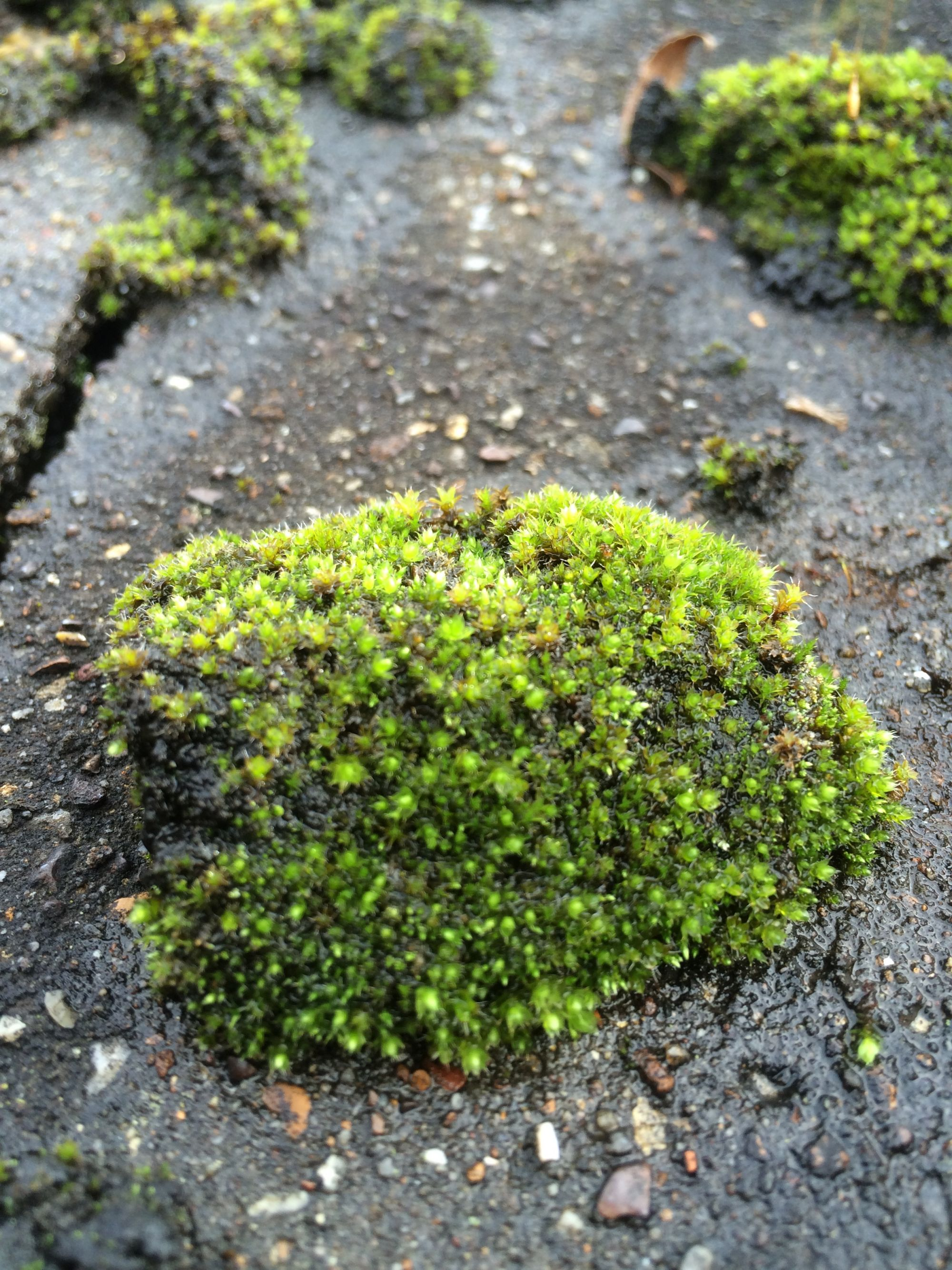 Moss Removal Roof Moss Removal Cleaning Without Pressure